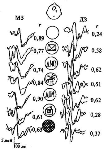 Сходство и различие в фенотипических проявлениях. Зрительные ВП затылочной области в парах МЗ и ДЗ близнецов. Толстой линией обозначены ВП одного близнеца, тонкой - ВП другого близнеца. Числа - коэффициенты